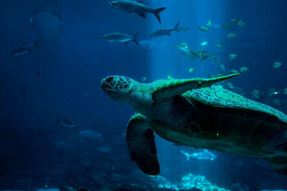 Canudo de Papel é melhor para a vida marinha
